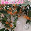 金木犀,香水,作り方